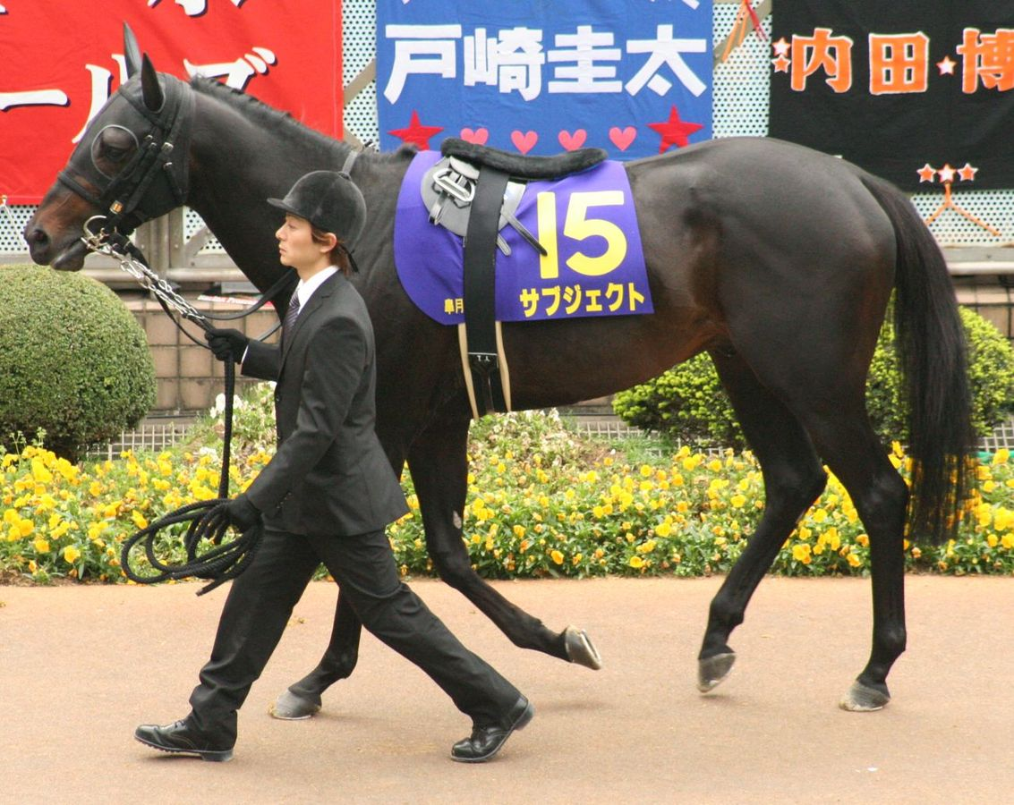 The history of race horse breeding has produced the thorughbred, the most dominant horse in equestrian history ... photo by CC user Goki on wikimedia commons